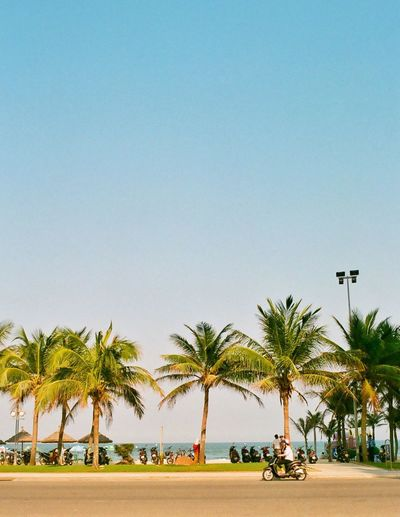 Film Photography Analogue Photography Afternoon Holiday Capture The Moment Vietnam Danang Mykhebeach Palm Tree Copy Space Tree Clear Sky Outdoors Travel Destinations Day Building Exterior Nature Tranquility Architecture Beach Sky Water No People