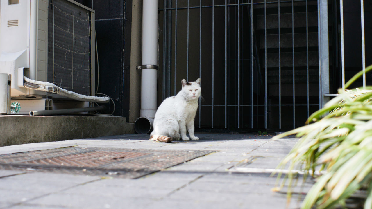 Animal Themes One Animal Cat City Life Nex5 Takumar 28mm F3.5 City Day Sleepy Sleepy Cat