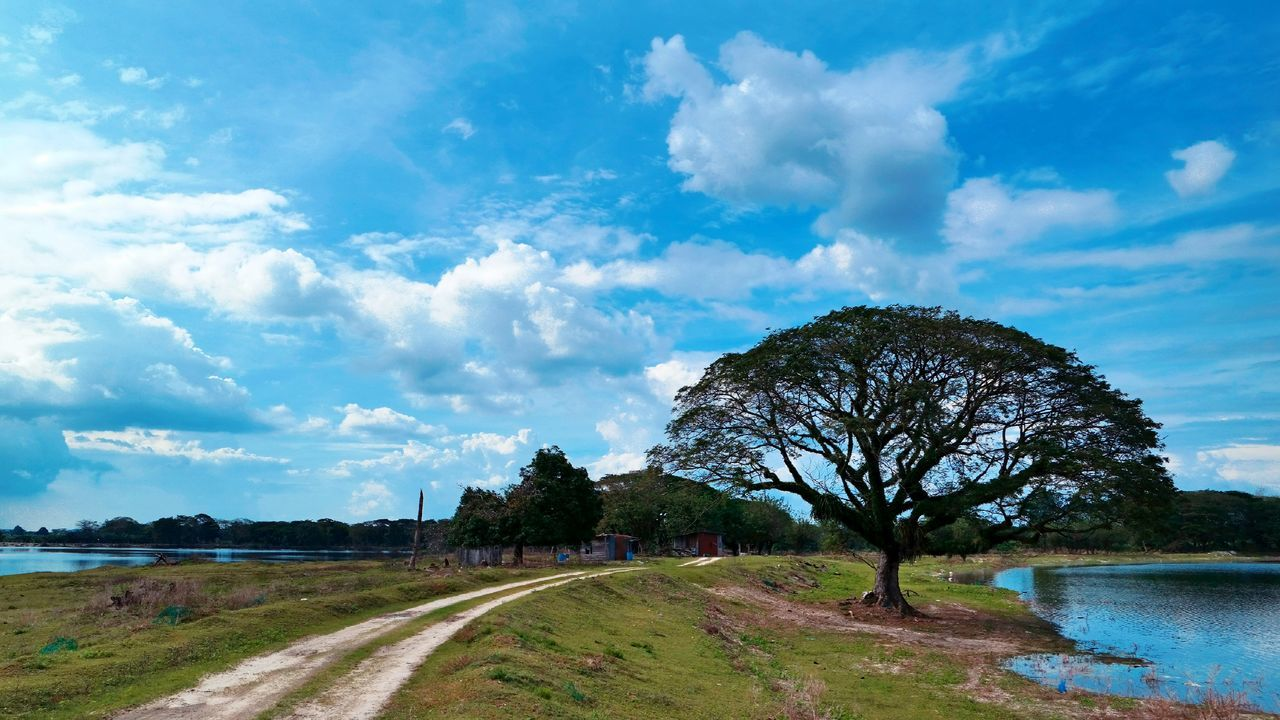 cloud - sky, tree, sky, water, nature, landscape, day, scenics, road, tranquility, river, no people, outdoors, beauty in nature, bare tree