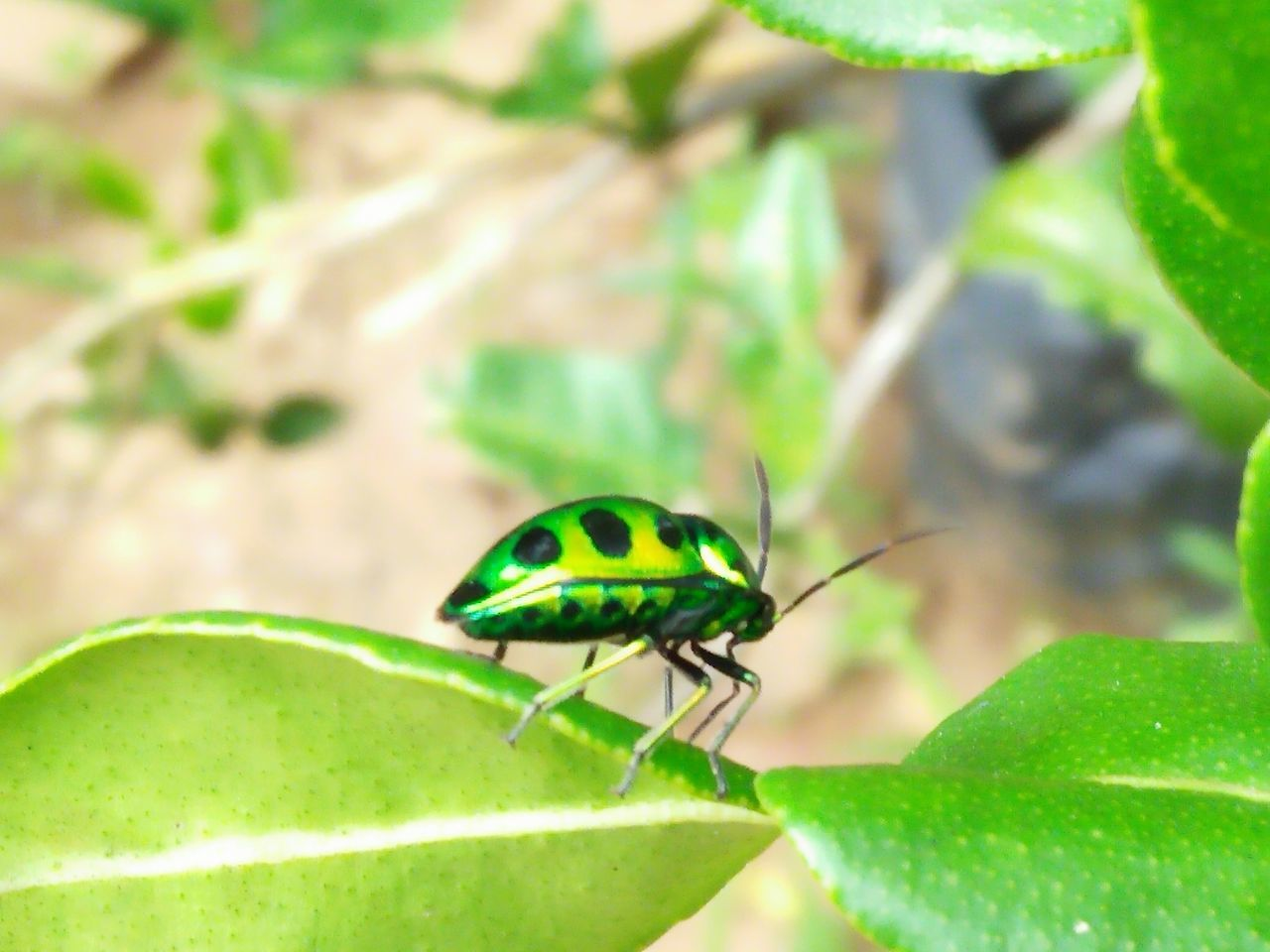 green color, leaf, insect, animals in the wild, animal themes, one animal, plant, close-up, day, nature, animal wildlife, no people, growth, outdoors, grass