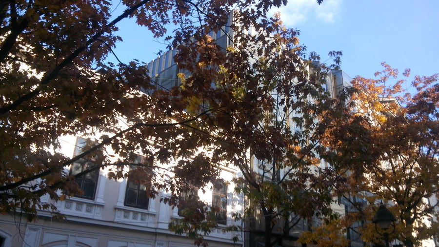 Architecture Autumn Lights Autumn Colors Autumn In Belgrade Autumn Trees Beauty In Nature Branch Building Exterior Built Structure City City Day Growth Lights On The Building Low Angle View Nature No People No People, Old Architecture Old Buildings Old Historical Center Of Belgrade, Serbia Outdoors Sky Tree Trees Hiding The Building