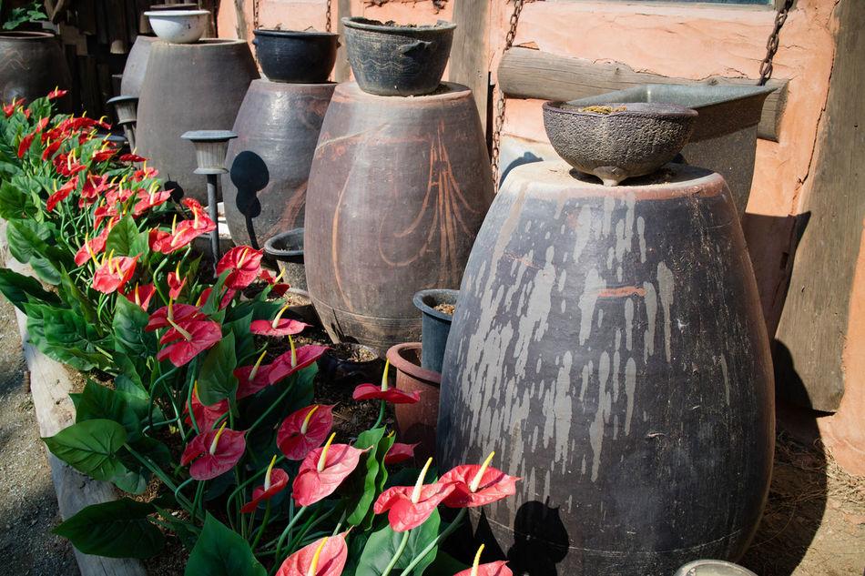 Brown Crocks Day Day Out Daylight Flower Garden, Home Jangdokdae Korea Korean Korean Culture Korean Food No People Outdoors Platform Red Spring Traditional