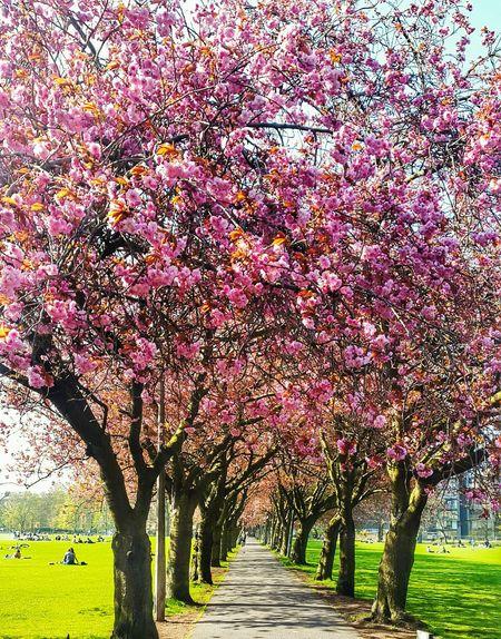 Edinburgh Mobilephotography Beautiful Sunshine Spring Has Arrived Spring 2016