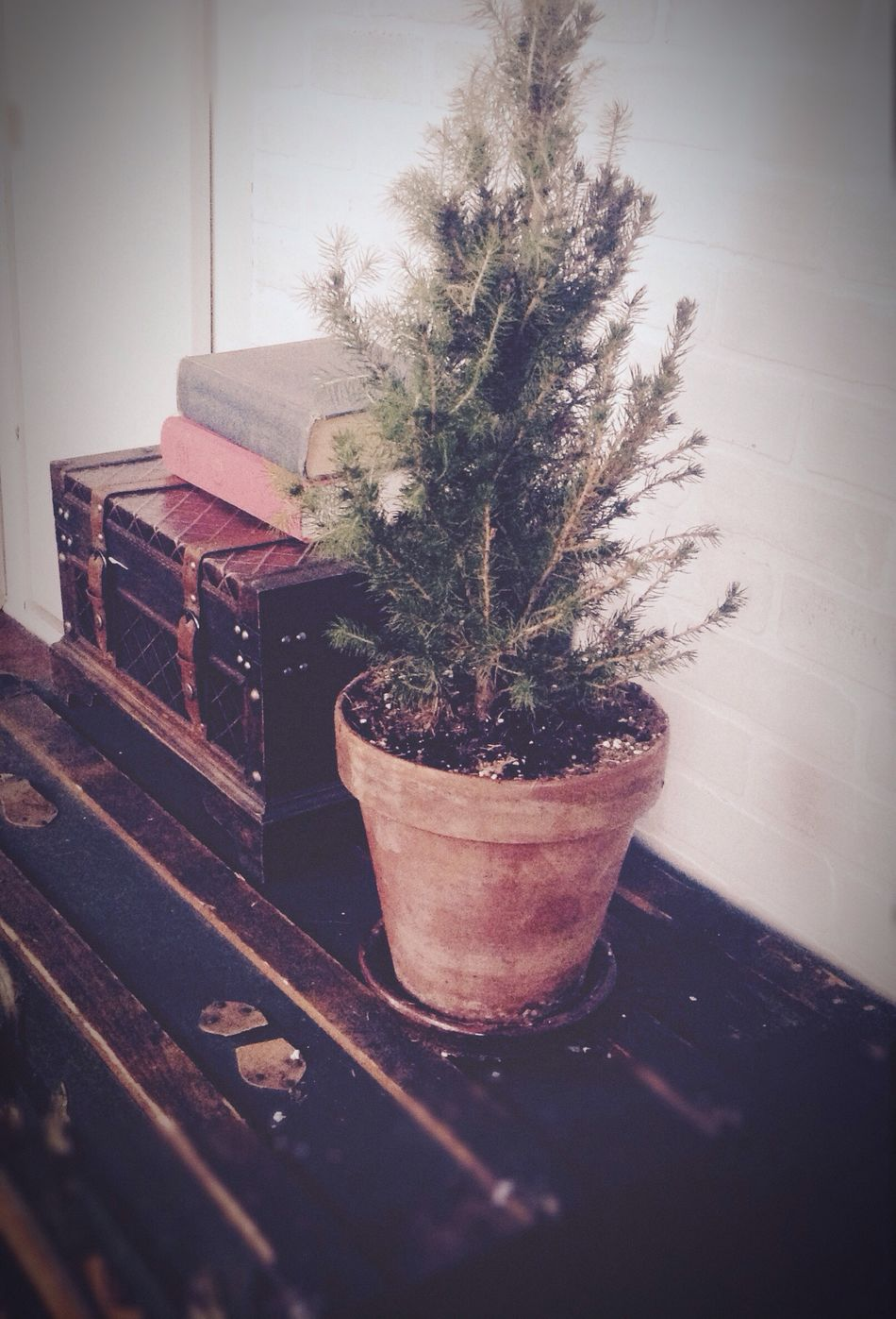 Trunks, books and a pine tree. Home Tree Pine Trunk Books Brick Wall Pieces Of Home Bits And Pieces