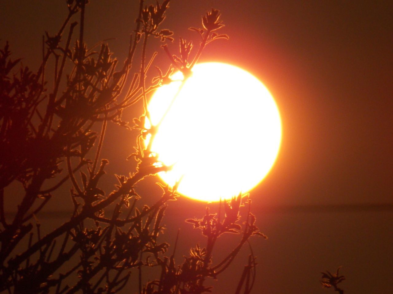 sun, sunset, beauty in nature, nature, scenics, silhouette, sunlight, tranquil scene, outdoors, orange color, sky, low angle view, no people, moon, tree, tranquility, growth, plant, clear sky, branch, close-up, day, astronomy