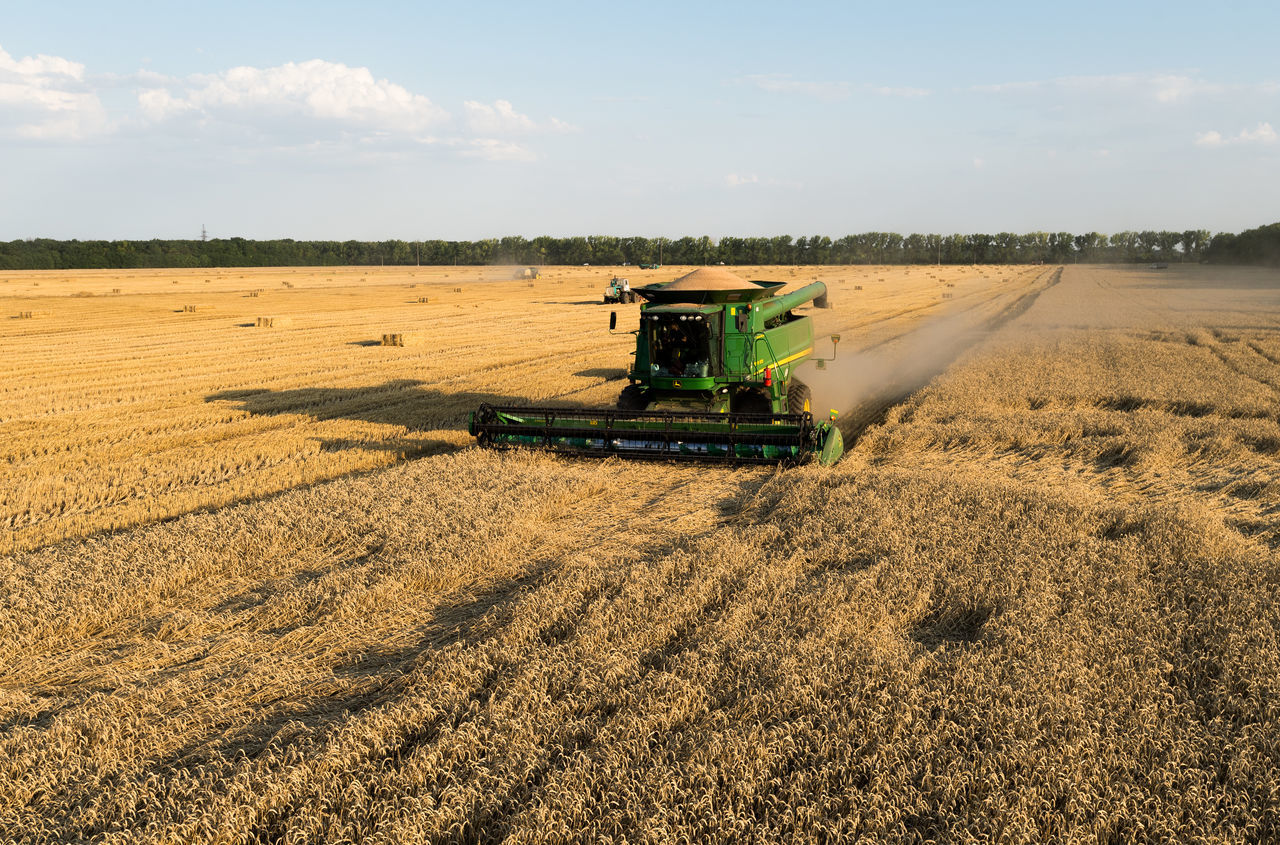 Russia, Krasnodar region, agriculture, wheat, harvesting wheat, granary Abandoned Agriculture Arid Climate Day Dirt Distant Dry Farm Field Getting Away From It All Grass Grassy Landscape No People Outdoors Remote Running Rural Scene Side View Summer