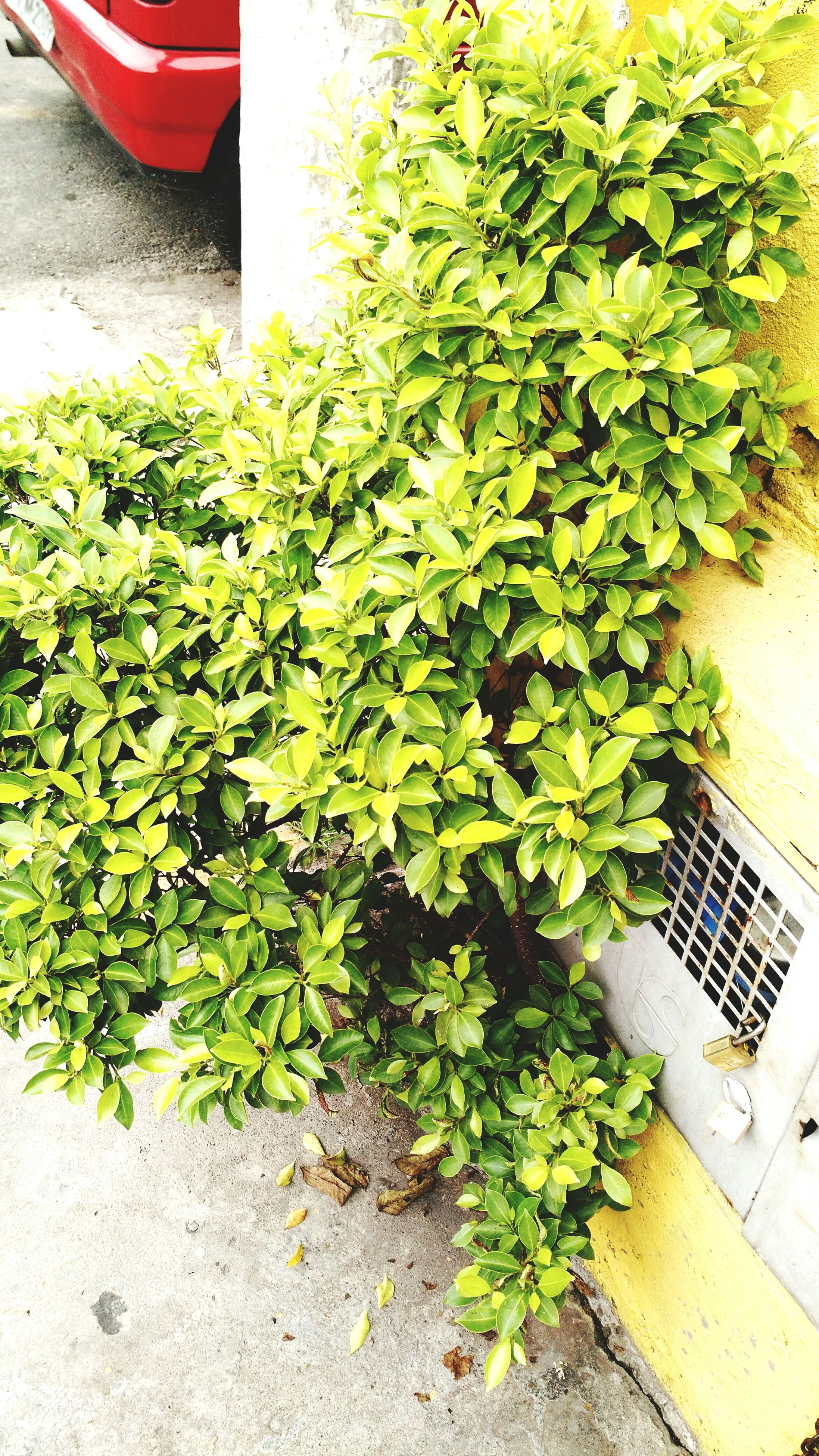 plant, growth, leaf, building exterior, built structure, architecture, green color, potted plant, front or back yard, high angle view, growing, nature, no people, freshness, outdoors, day, house, flower, wall - building feature, ivy