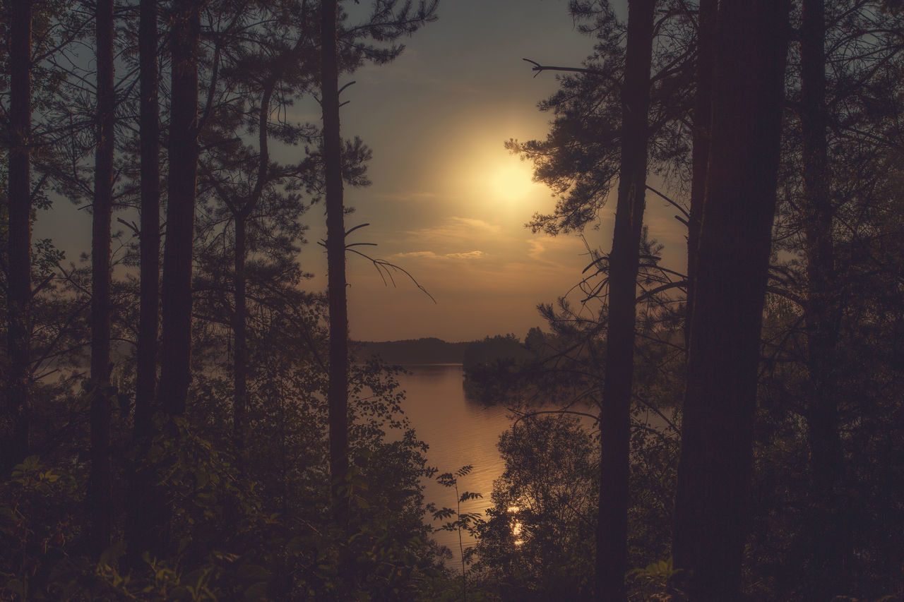 Sunset at the lake Murner See in Wackersdorf, Bavaria Beauty In Nature Day Forest Growth Idyllic Lake Nature No People Non-urban Scene Outdoors Reflection Scenics Silhouette Sky Sunset Tranquil Scene Tranquility Tree Water