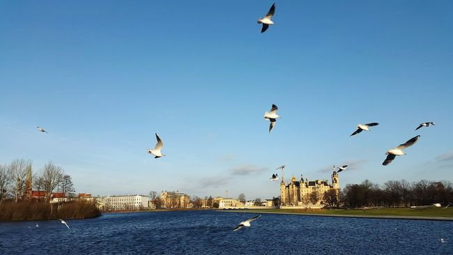Flying Bird Water Horizontal Nature Beauty In Nature Sky Castle View  Sea Seascape Seagulls And Sea Seagull