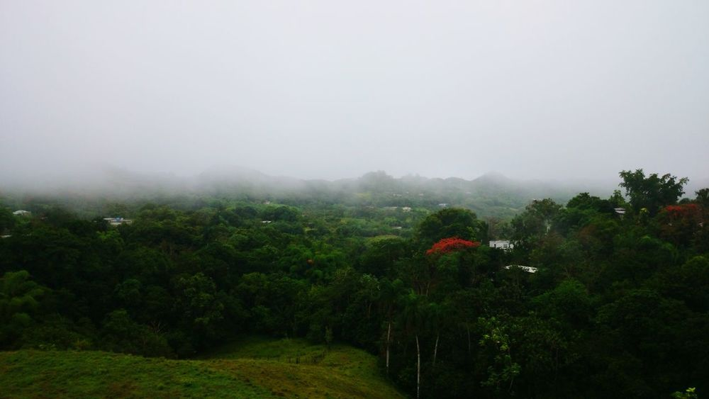 Fog Tree Weather Outdoors Landscape Nature Scenics PUERTO RICO 🇵🇷 Beauty In Nature Tranquility Tropical Storm EyeEmNewHere