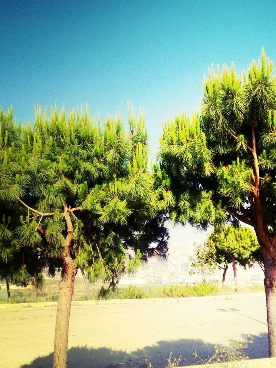 tree, palm tree, growth, nature, clear sky, tranquility, day, beauty in nature, scenics, no people, outdoors, green color, landscape, tranquil scene, sky, plant