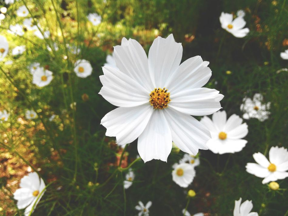 purity.. ;) Flower Porn Flowers Flower Photography Flowers_collection White Flower Nature_collection Eyeem Philippines EyeEm Nature Lover