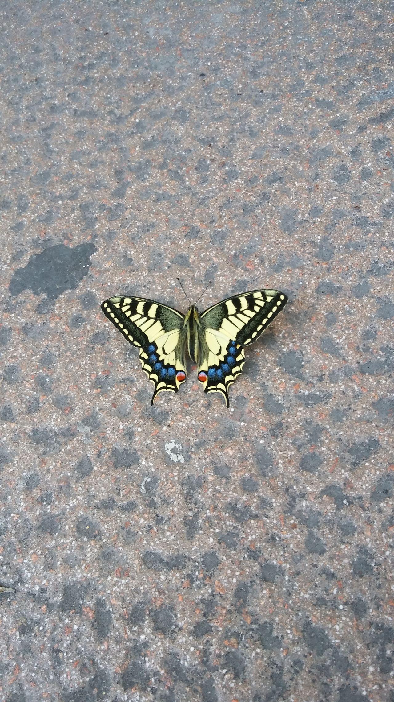 Farfalla Farfalle Farfalle🐝🐞 Mariposa Mariposas Baterfly Baterfly Garden Nature_collection Natura Nature Beauty In Nature