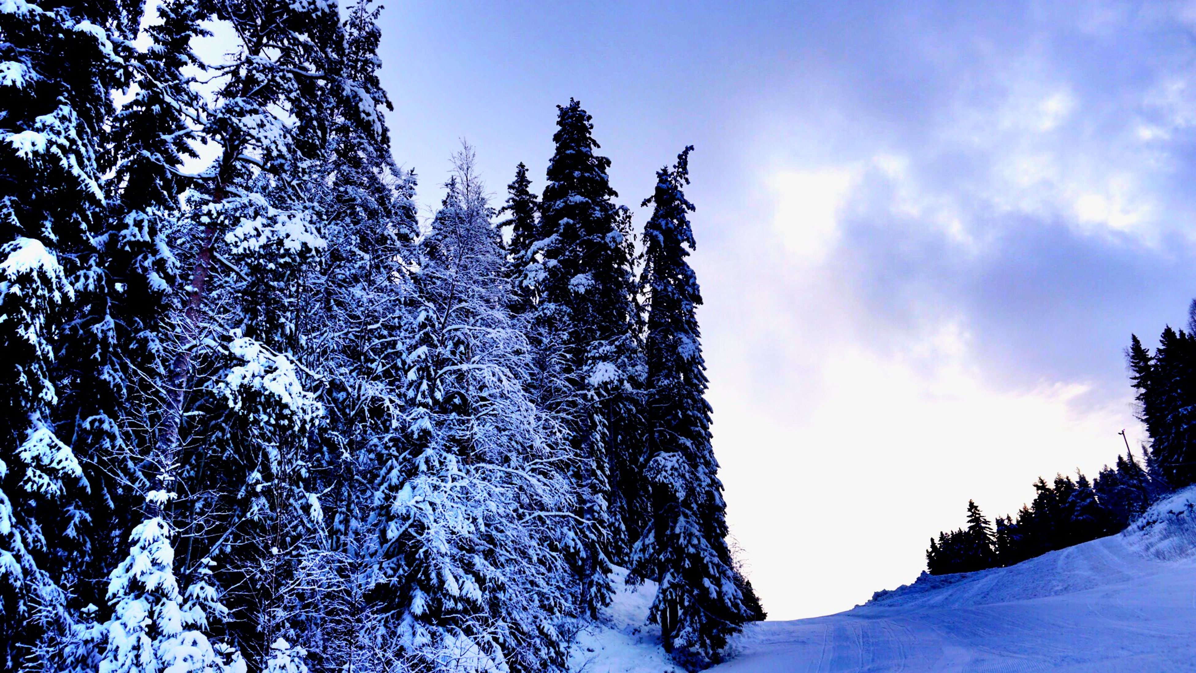 snow, winter, cold temperature, season, tree, beauty in nature, tranquility, weather, low angle view, sky, tranquil scene, nature, scenics, covering, white color, blue, snowcapped mountain, frozen, mountain, outdoors