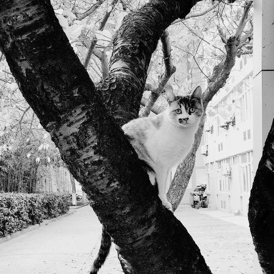 Pets Animal Themes One Animal Mammal Domestic Animals Tree Trunk Tree Domestic Cat Feline Day Outdoors Dog Nature Bare Tree Branch No People Climbing Sky 遇到了很多 親愛的 可是怕遇到你
