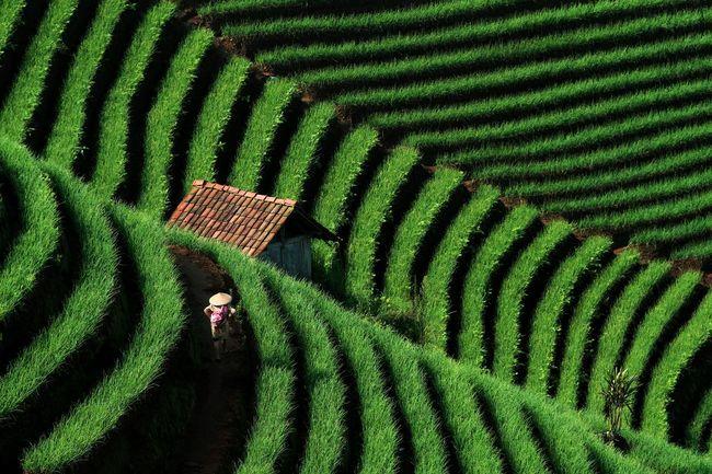 Walking home. Argapura Maja Majalengka INDONESIA Terasering Terrace Visitindonesia Farmers Humaninterest Travelphotography Showcase: January Pattern Pieces