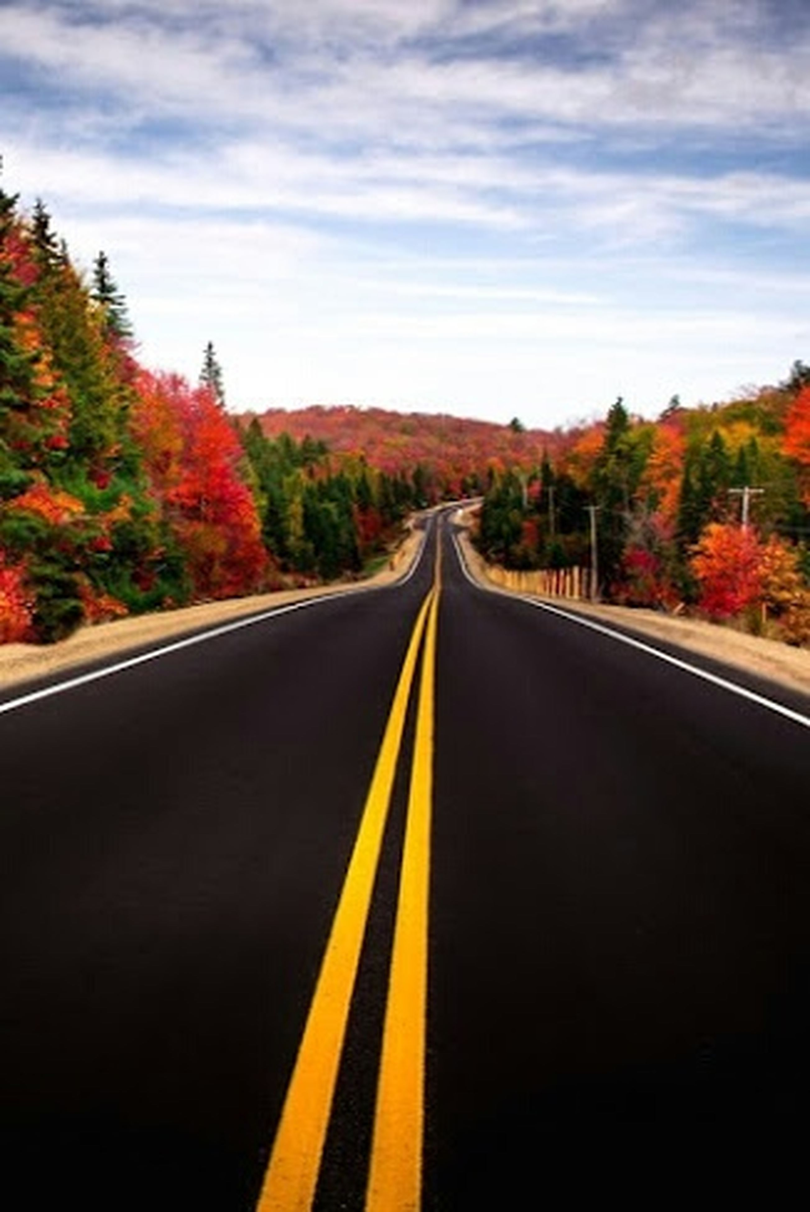 the way forward, transportation, diminishing perspective, vanishing point, tree, road, sky, road marking, yellow, cloud - sky, cloud, nature, long, tranquility, double yellow line, country road, autumn, beauty in nature, tranquil scene, growth