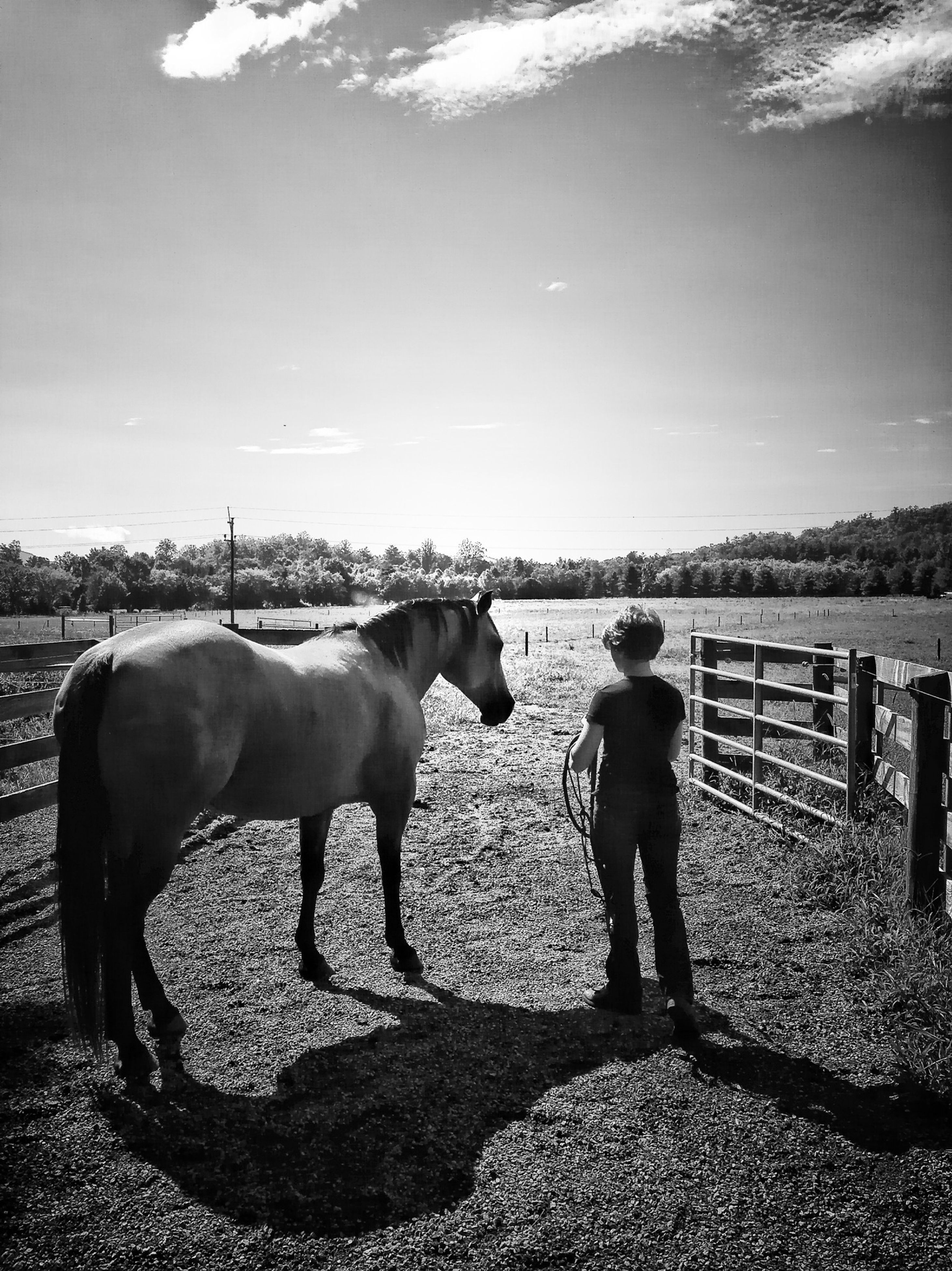 domestic animals, animal themes, mammal, horse, livestock, standing, sky, one animal, full length, pets, two animals, dog, walking, working animal, fence, water, field, herbivorous, tree, nature