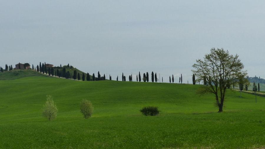Landscape in Tuscany, Italy Landscape Landscape_Collection Nature Nature_collection Tuscany Italy Green Trees Traveling Toscana