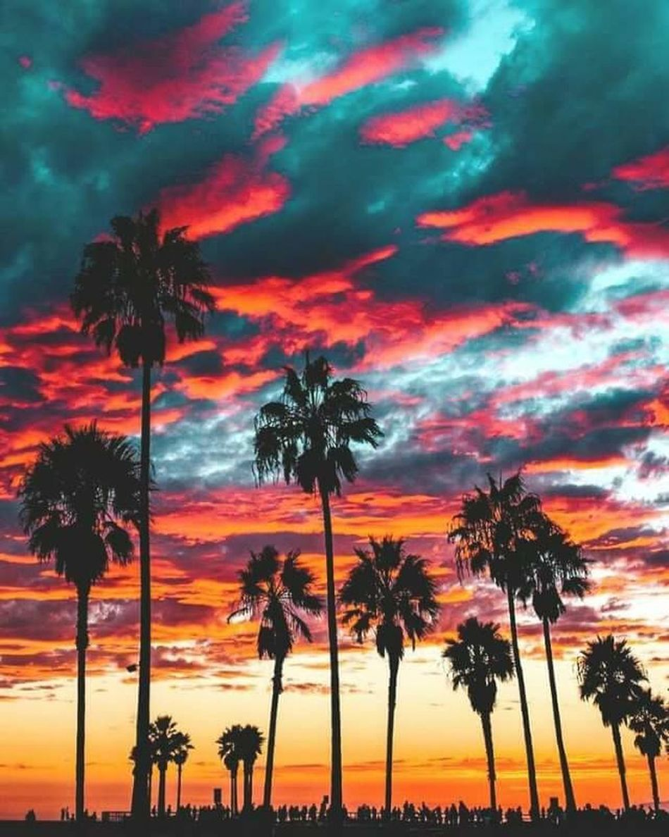 Beauty In Nature Nature Sky Cloud - Sky Taking Photos Taking Photo Enjoying Life Likeforlike Like4like Amazing Place First Eyeem Photo Followme Morroco Portrait Photography Travel Hanging Out Portrait Hello World ✌ Cool Day Sieving Palm Trees