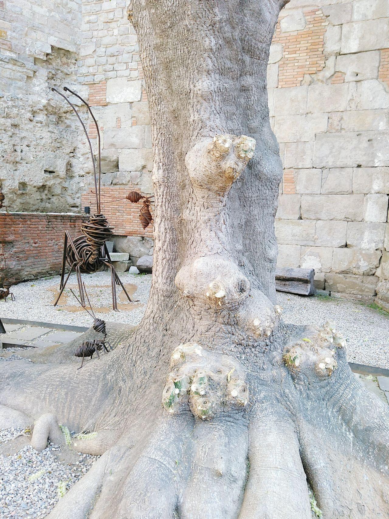 City Tree Hormigasnegras Barcelona Day Barcelona Streets Tourism Low Angle View