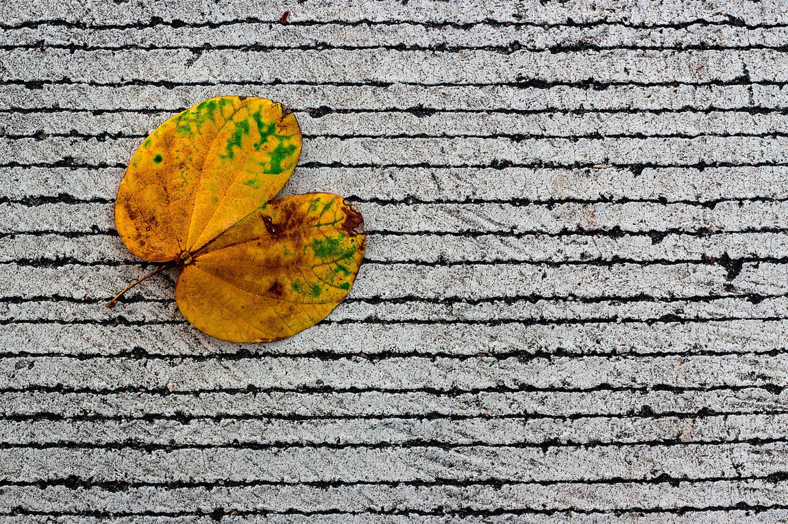Dry leaves on concrete view,Yellow dried leaf on the dirty concrete floor. Flora, Pattern, Texture And Light Background Beauty, Detail, Tiffany, Lamp, Red, Brown, Tiffany Lamp Fresh, Natural, Nature, Old, Retro, Vintage, Bicycle, Street, Bike, Transport, City, Urban, Background, White, Style, Travel, Wall, Classic, Bycicle, Cycle, Photography, Lifestyle, Art, Black, Day, Summer, Color, Cycling, Hipster, Sport, Road, Design, Rusty, Aged, Antique, Outdo Spring, Summer, Wallpaper,