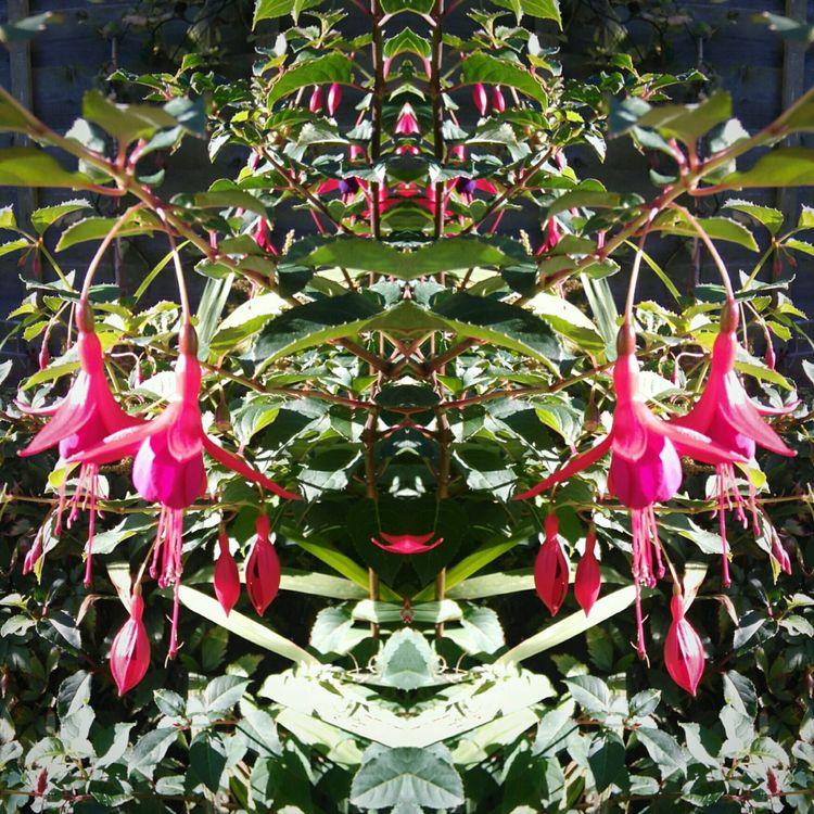 FuschiaPinkFlowers Mirrored Image Autumn Flowers Eyeemflowers EyeEm Nature Lover
