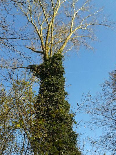 Ein Baum Treetastic Tree Porn In The Forest Unterwegsunddraußen