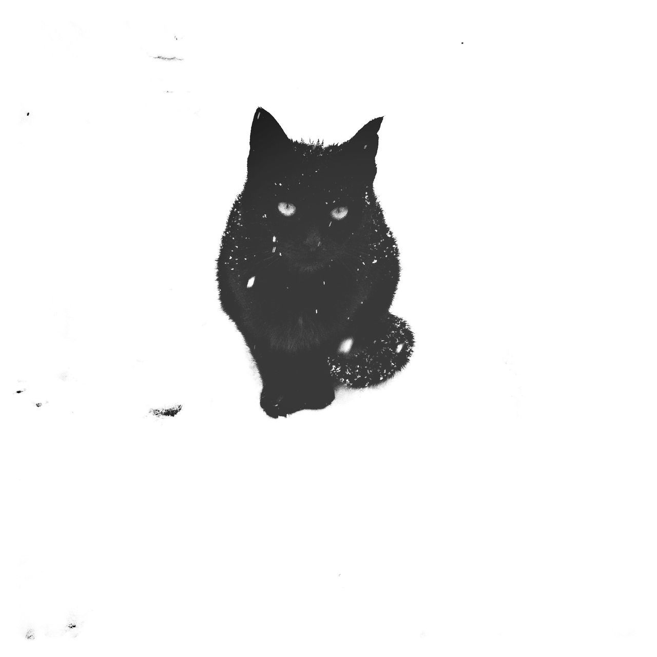 Kitty in the snow. Winter Black Cat Snow EyeEm Bnw