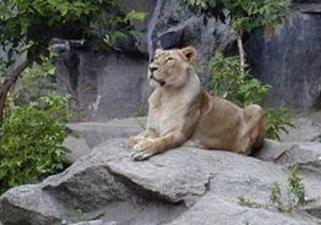 Animal Head  Animal Themes Looking Away No People Wildlife Zoology