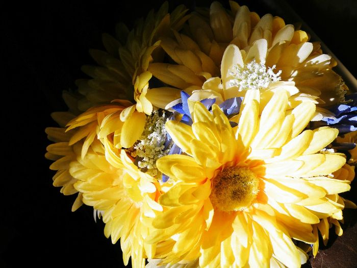 Flower Nature Petal Yellow Beauty In Nature Black Background Close-up No People Bouquet Wedding Happiness Together Love Picture Perfect High Angle View Flowers Flower Head Gift Girls Best Friend Fragility Marraige Beauty DIY Multi Colored Craft