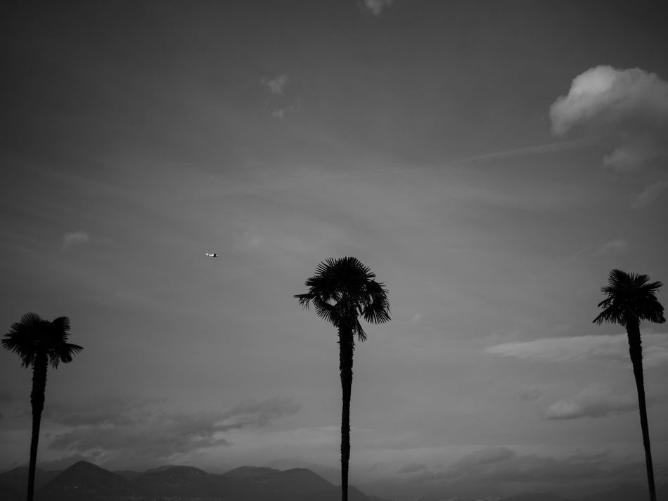 #3 Beauty In Nature Black & White Black And White Black And White Photography Black&white Blackandwhite Blackandwhite Photography Cloud - Sky Day Low Angle View Mountain Mountains Nature No People Outdoors Palm Tree Plane Scenics Silhouette Sky Tranquility Tree Tree Trees