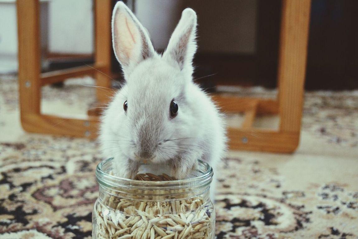Rabbit Mimi Beauty