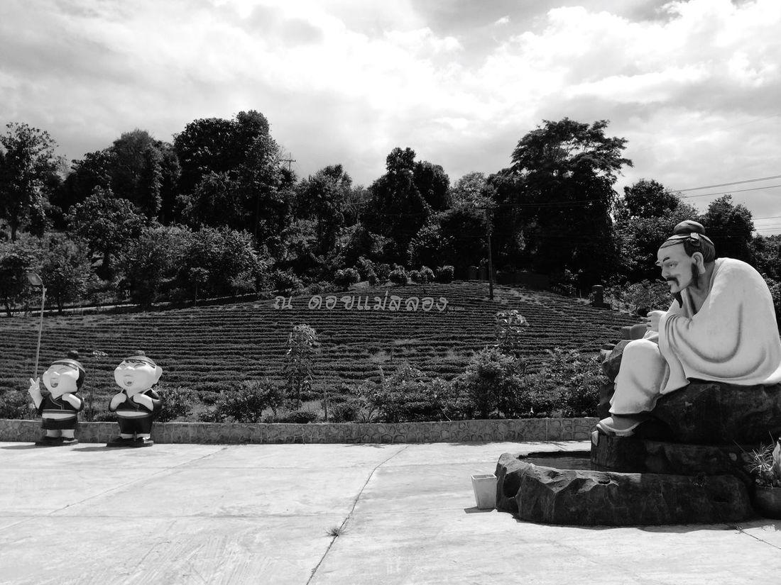 ไร่ชา 101 (Tea 101 Platation) Doi Mae Salong Chiang Rai. Thailand_allshots Travel Photography Thailand IPhoneography EyeEm Best Shots - Black + White Blackandwhite Photography EyeEm Best Shots Tea Time Blackandwhite Iphonephotography