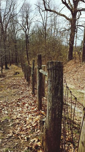 Fall Leaves Fence Trees Nature Photograpghy Path First Eyeem Photo