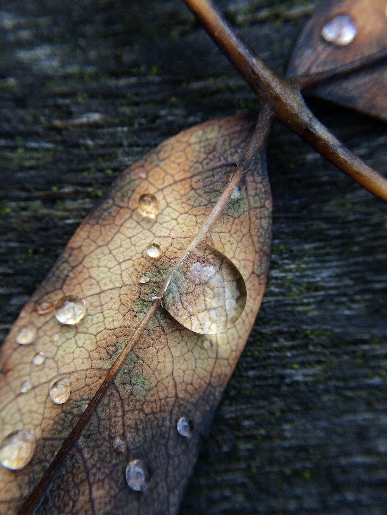 Maximum Closeness Leaves Autumn 2016 Close-up Fallen Nature's Diversities Drops Autumn Collection Pure And Untouched (raw Image)
