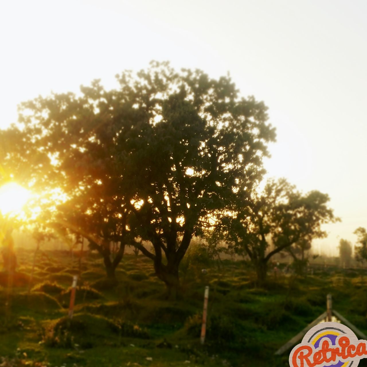 tree, lens flare, nature, growth, no people, beauty in nature, outdoors, sky, day, close-up