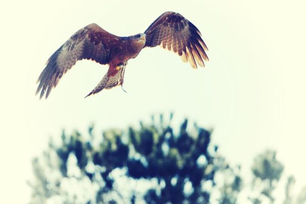 EyeEm Birds in Charleston by English