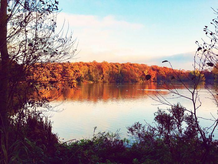 Beautiful trees reflected, UK First Eyeem Photo