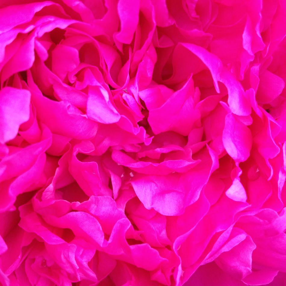 Flowers Colors Pink Fleurs