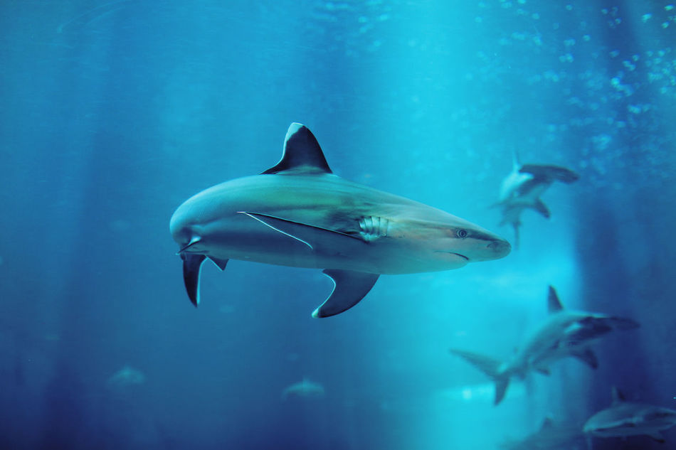 Beautiful stock photos of underwater, Animal Themes, Animals In Captivity, Aquarium, Blue