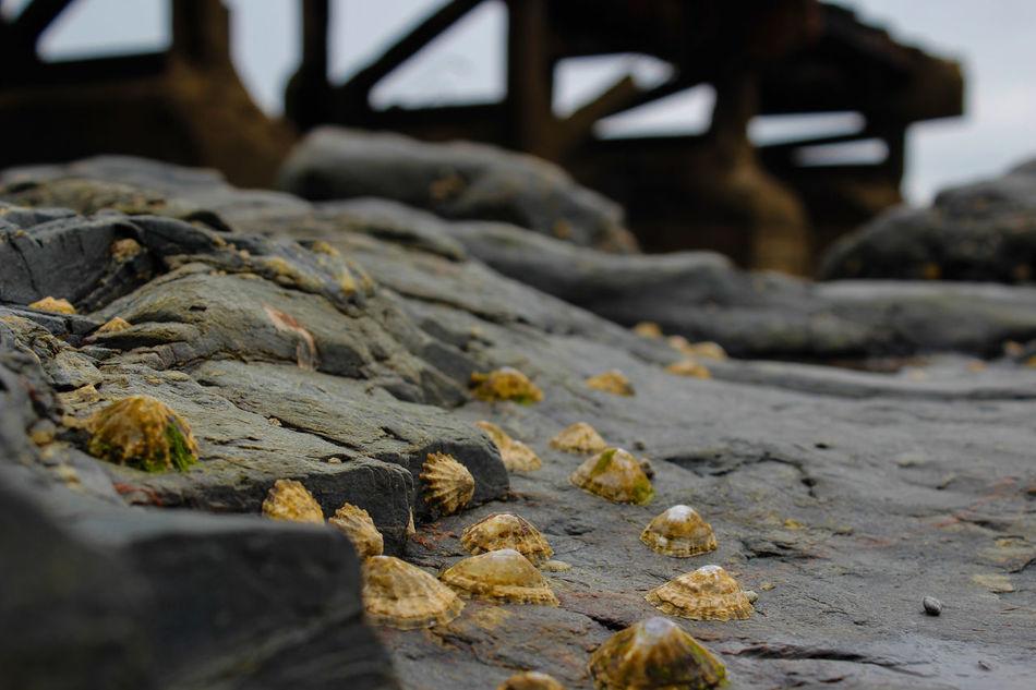 Klippen Großbritannien Ebbe - Flut Muschel England 🇬🇧 Ebbe Hello World Nature Landscape Water EyeEm Best Shots - Nature EyeEmBestPics HelloEyeEm Hello World ❤ EyeEmNewHere The Week Of Eyeem