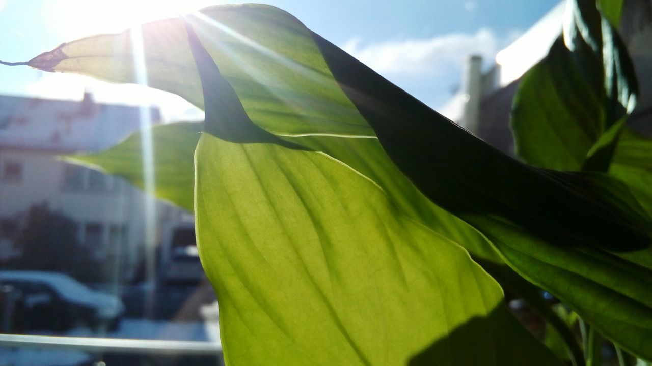 Sunlight Close-up Low Angle View Day Outdoors Nature Sky No People Plant Leaf Leaves Green Window Wintertime EyeEmNewHere GetbetterwithAlex Cloud - Sky Leafes Eyem Nature Lovers  Illuminated Beauty In Nature Backgrounds