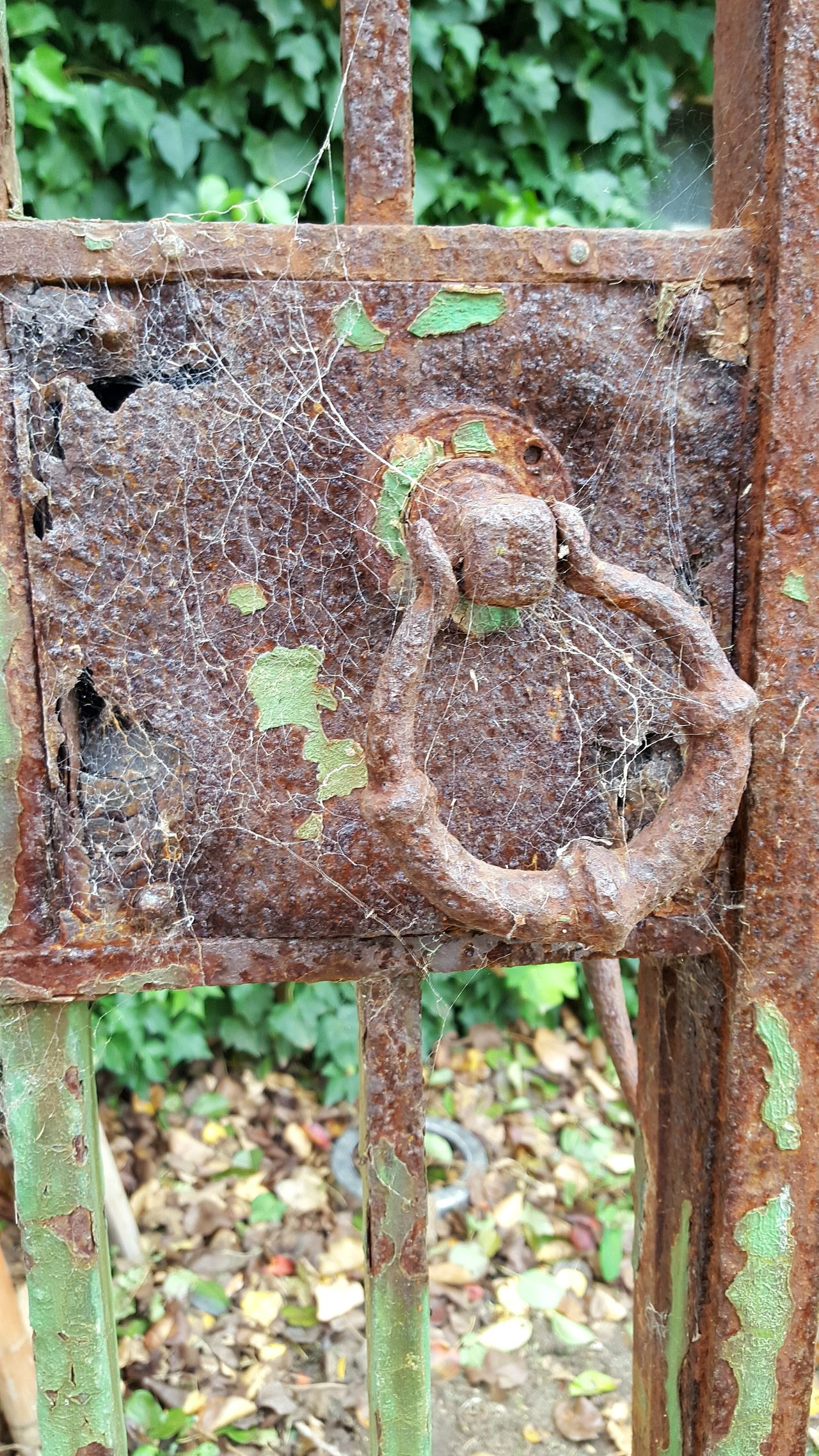 Old gate Cob Webs 0ld Gate old lock Wrought Iron Gate