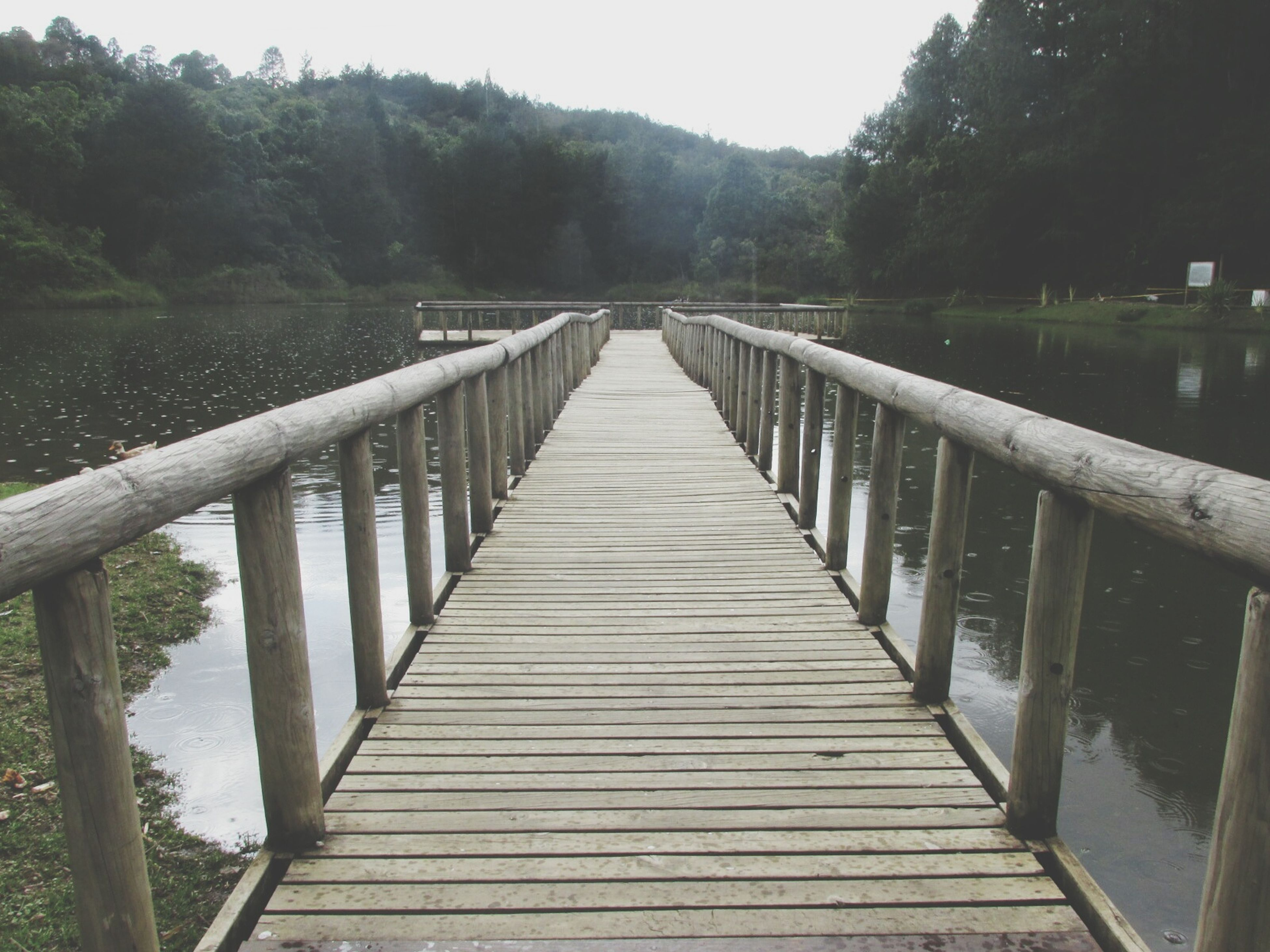water, the way forward, railing, tree, tranquility, tranquil scene, connection, footbridge, diminishing perspective, wood - material, river, bridge - man made structure, nature, lake, pier, built structure, boardwalk, scenics, beauty in nature, clear sky