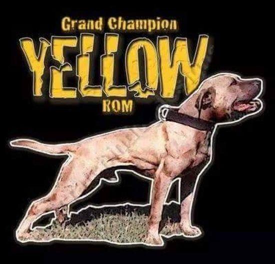 T0P BL00D Dog❤ Dogs Bulldog Gamedog Pitbull