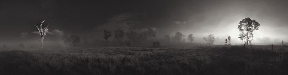 Tree Nature Field Tranquility Growth Landscape Tranquil Scene No People Beauty In Nature Outdoors Scenics Sky Grass Rural Scene Agriculture Day Monochrome Photography Panorama Wide Shot