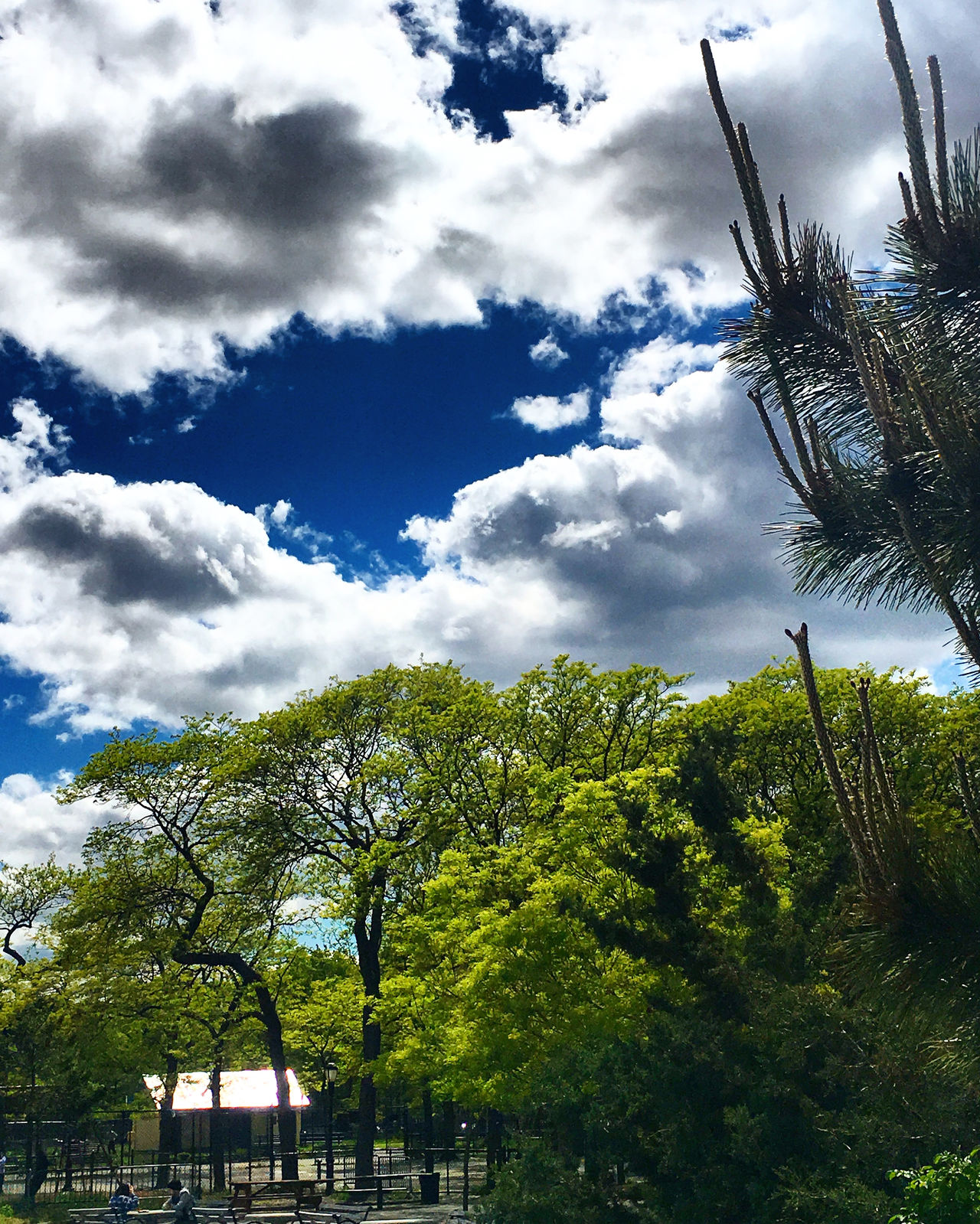Sky and Ground Beauty In Nature Cloud - Sky Day Green Color Growth Low Angle View Nature No People Outdoors Sky Tree