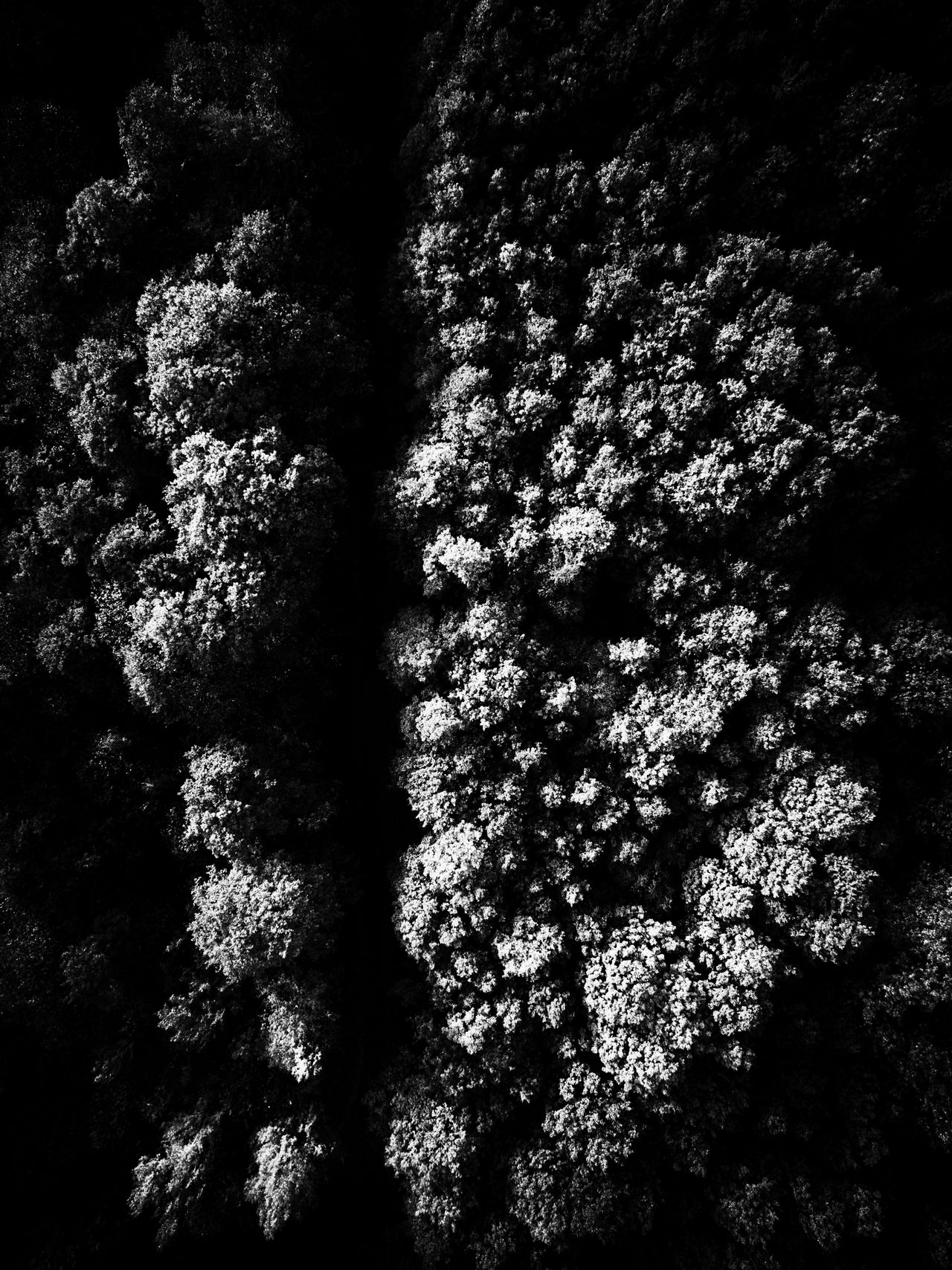 Abstract Abstract Photography Aerial Photography Aerial Shot Aerial View Black And White Blackandwhite Blackandwhite Photography Flying High Forest Forest Photography Minimal Minimalism Minimalobsession View From Above Wood