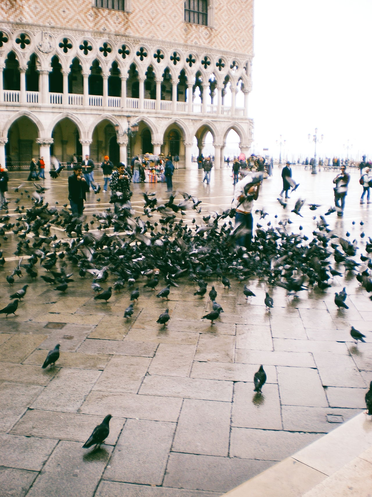 Throwback to the great massacre in Venice. Travel Destinations Travel Wanderlust My Year My View EyeEm Best Shots EyeEm Italy Italia Venice, Italy Pentax Architecture Birds